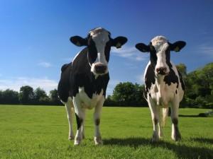 Michigan Dairy Consultant