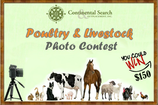 photo contest poultry livestock continental search